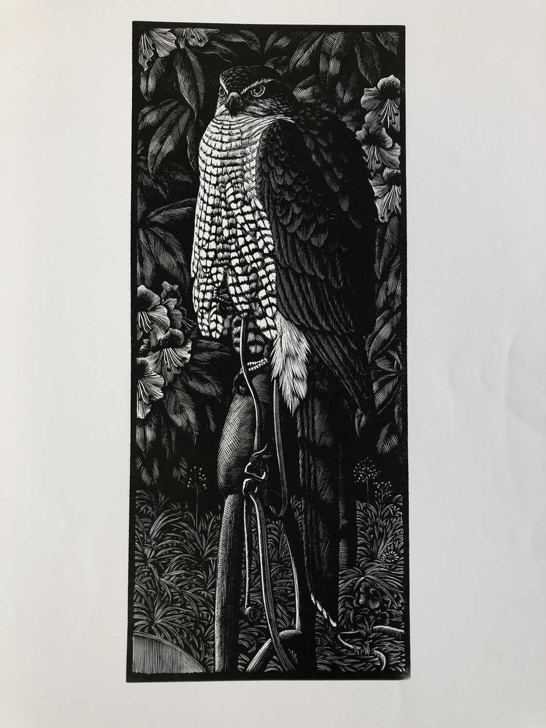 Charles Frederick Tunnicliffe OBE RA (1901-1979) The Memorial Collection Parts I and II - Image 18 of 19