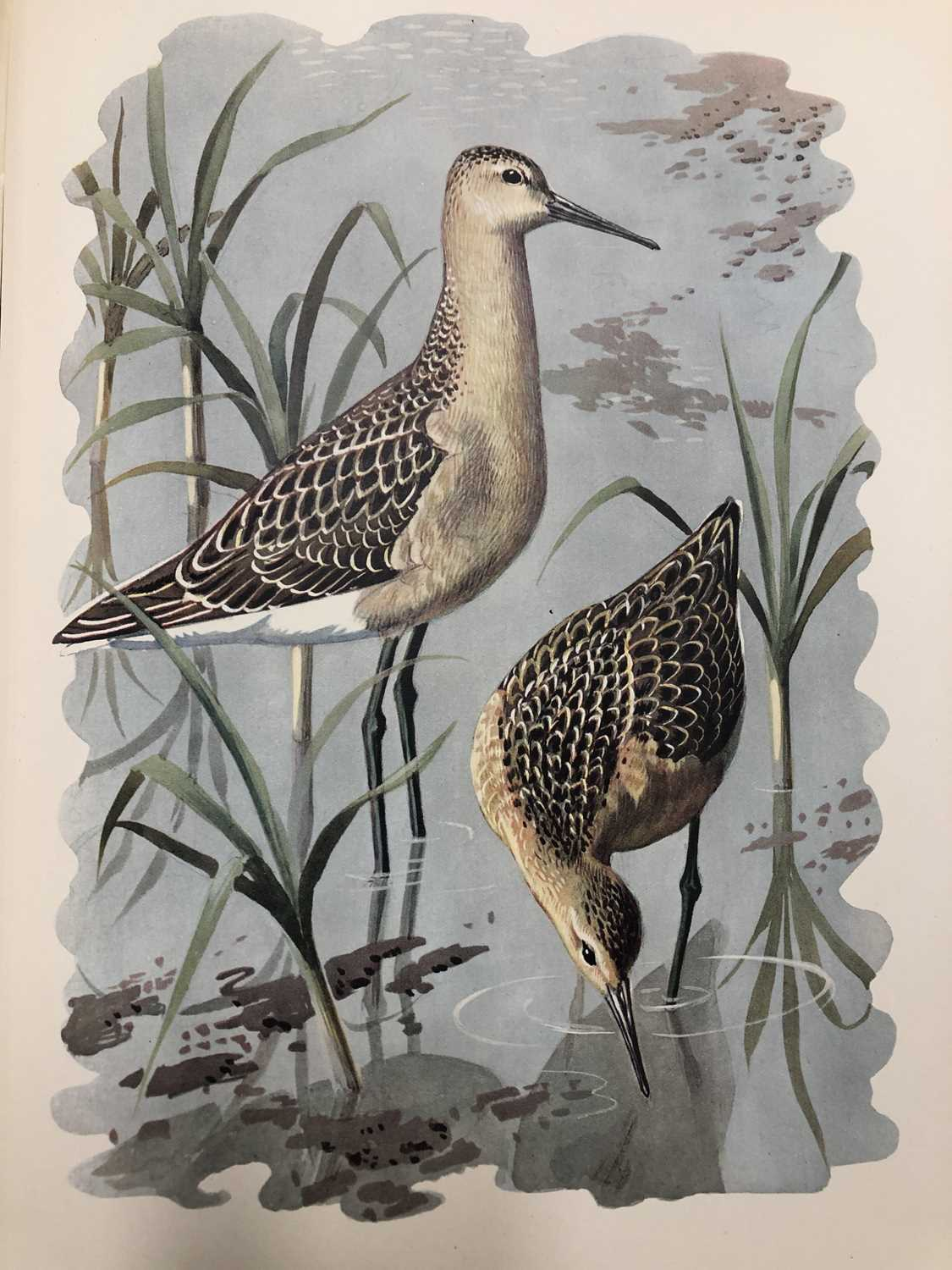 Charles Frederick Tunnicliffe OBE RA (1900-1979) Shorelands Summer Diary - Image 10 of 11