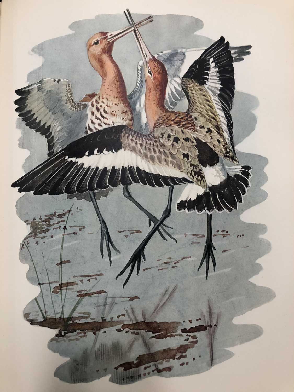 Charles Frederick Tunnicliffe OBE RA (1900-1979) Shorelands Summer Diary - Image 4 of 11