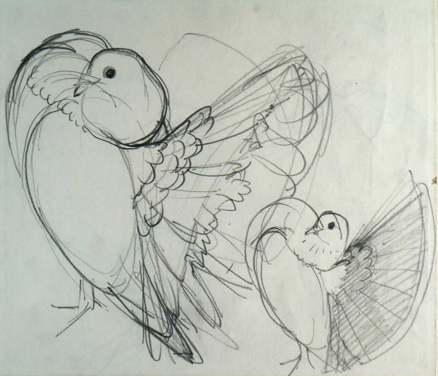 Charles Frederick Tunnicliffe OBE RA (1901-1979) Three Pigeon Drawings inc Exhibition Homer - Image 3 of 8