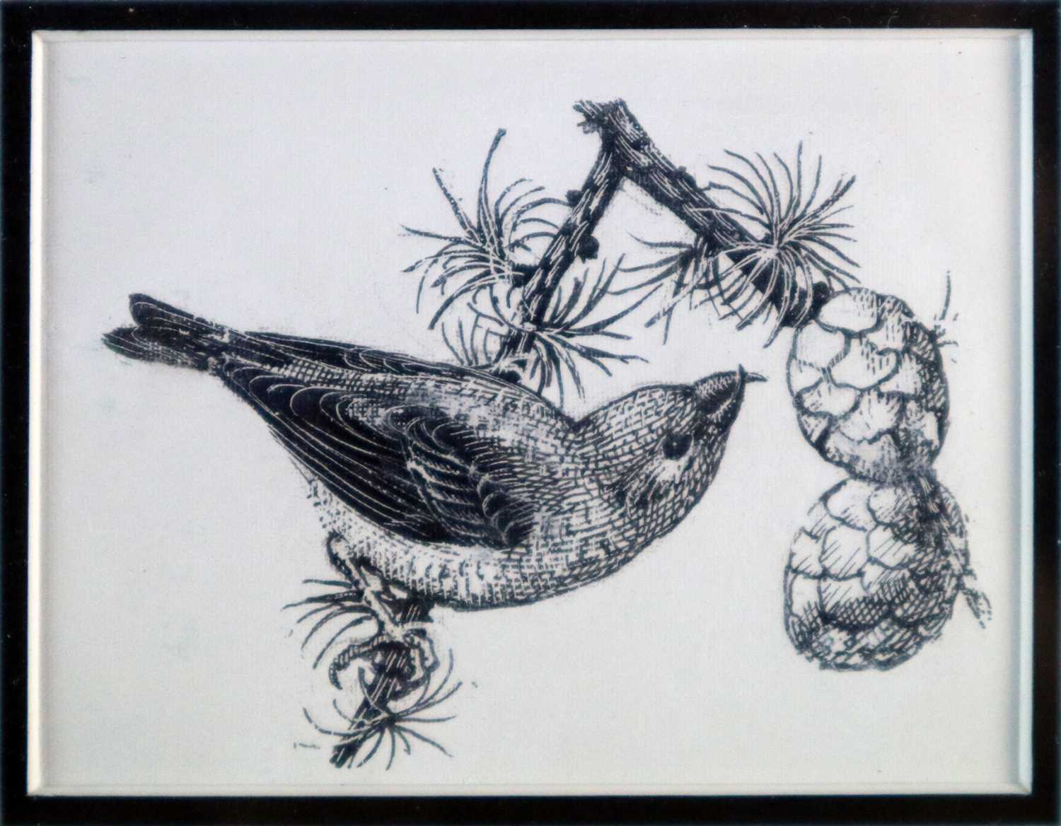 Charles Frederick Tunnicliffe OBE RA(1901-1979) Crossbill