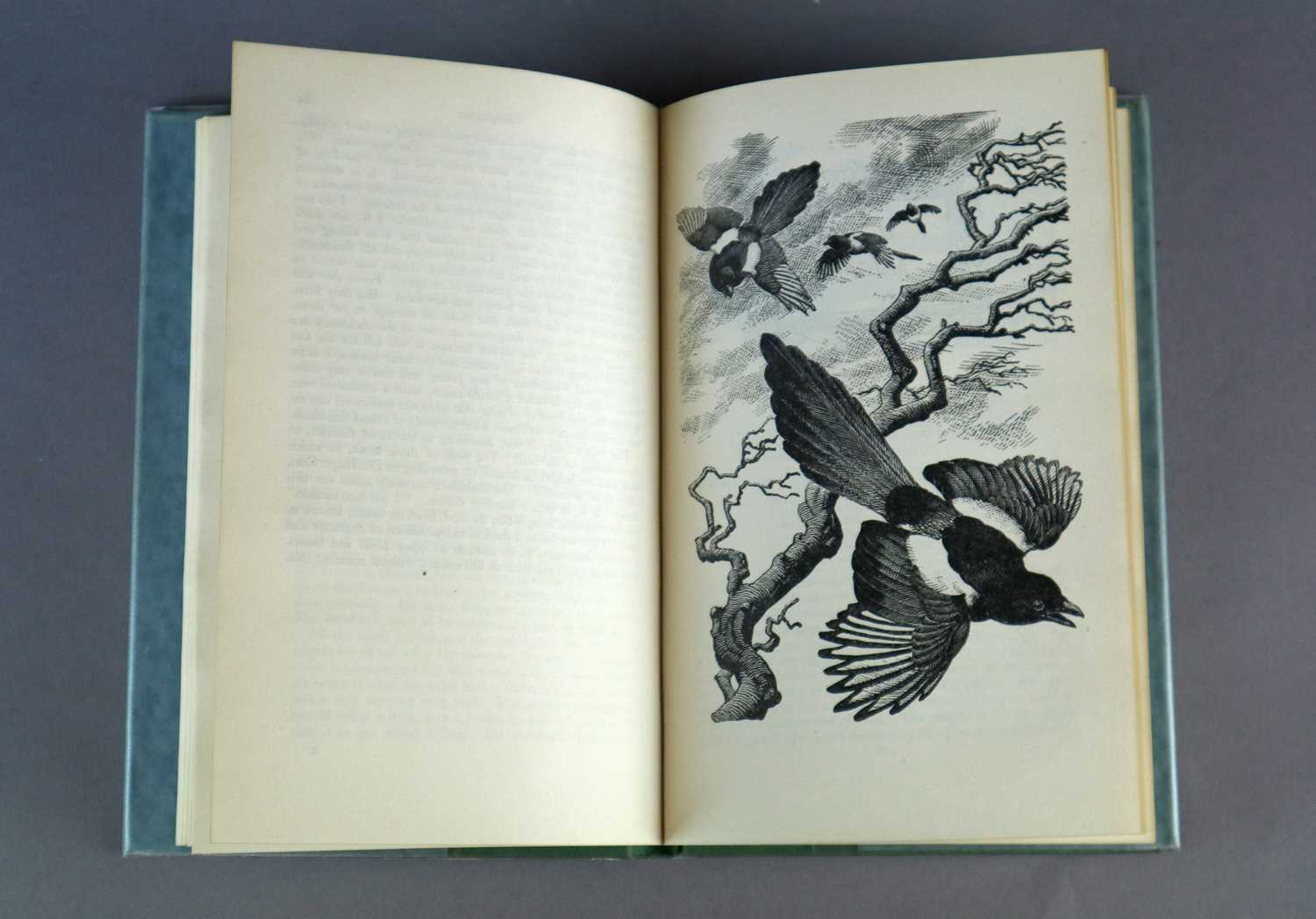 Charles Frederick Tunnicliffe OBE RA (1901-1979) Magpie Chase - Image 4 of 5