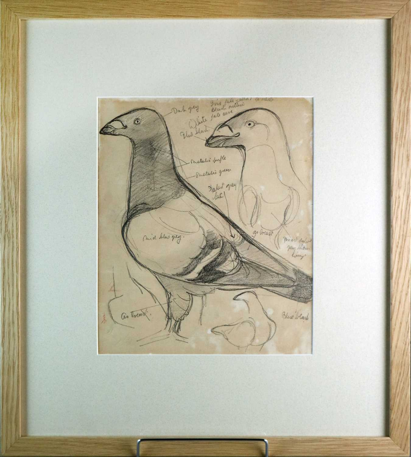 Charles Frederick Tunnicliffe OBE RA (1901-1979) Three Pigeon Drawings inc Exhibition Homer - Image 6 of 8