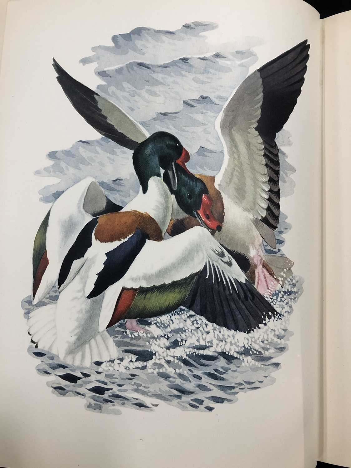 Charles Frederick Tunnicliffe OBE RA (1900-1979) Shorelands Summer Diary - Image 8 of 11