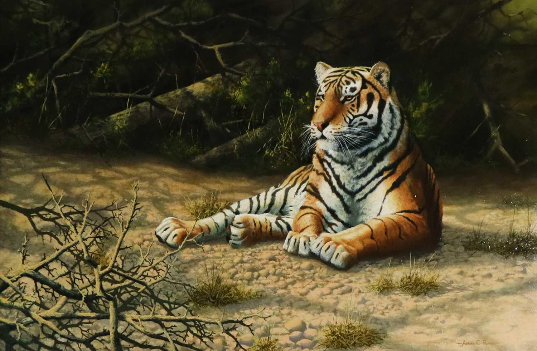Adrian C Rigby (b.1962) A Tiger Resting