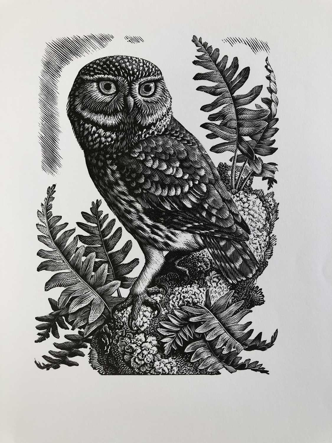 Charles Frederick Tunnicliffe OBE RA (1901-1979) The Memorial Collection Parts I and II - Image 17 of 19