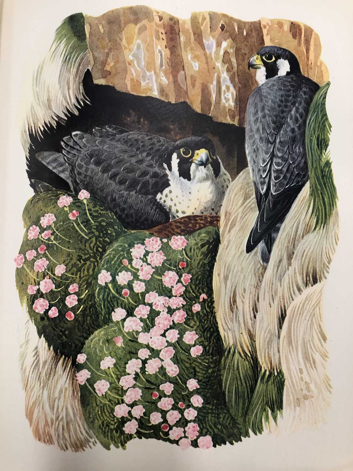 Charles Frederick Tunnicliffe OBE RA (1900-1979) Shorelands Summer Diary - Image 6 of 11