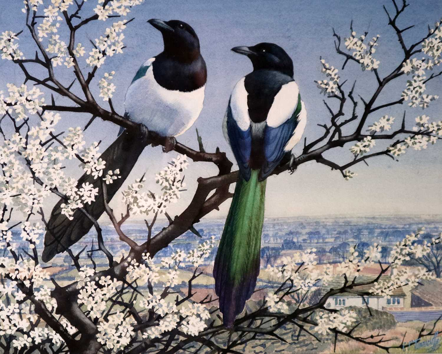 Charles Frederick Tunnicliffe OBE RA(1901-1979) Magpies in Blossom