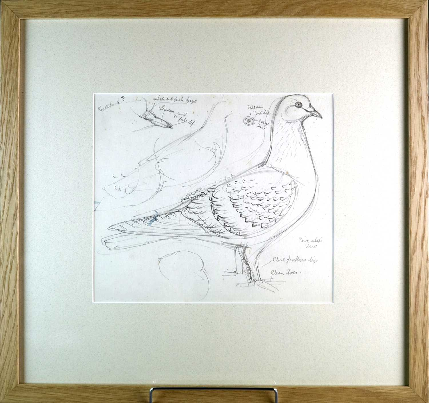 Charles Frederick Tunnicliffe OBE RA (1901-1979) Three Pigeon Drawings inc Exhibition Homer - Image 4 of 8