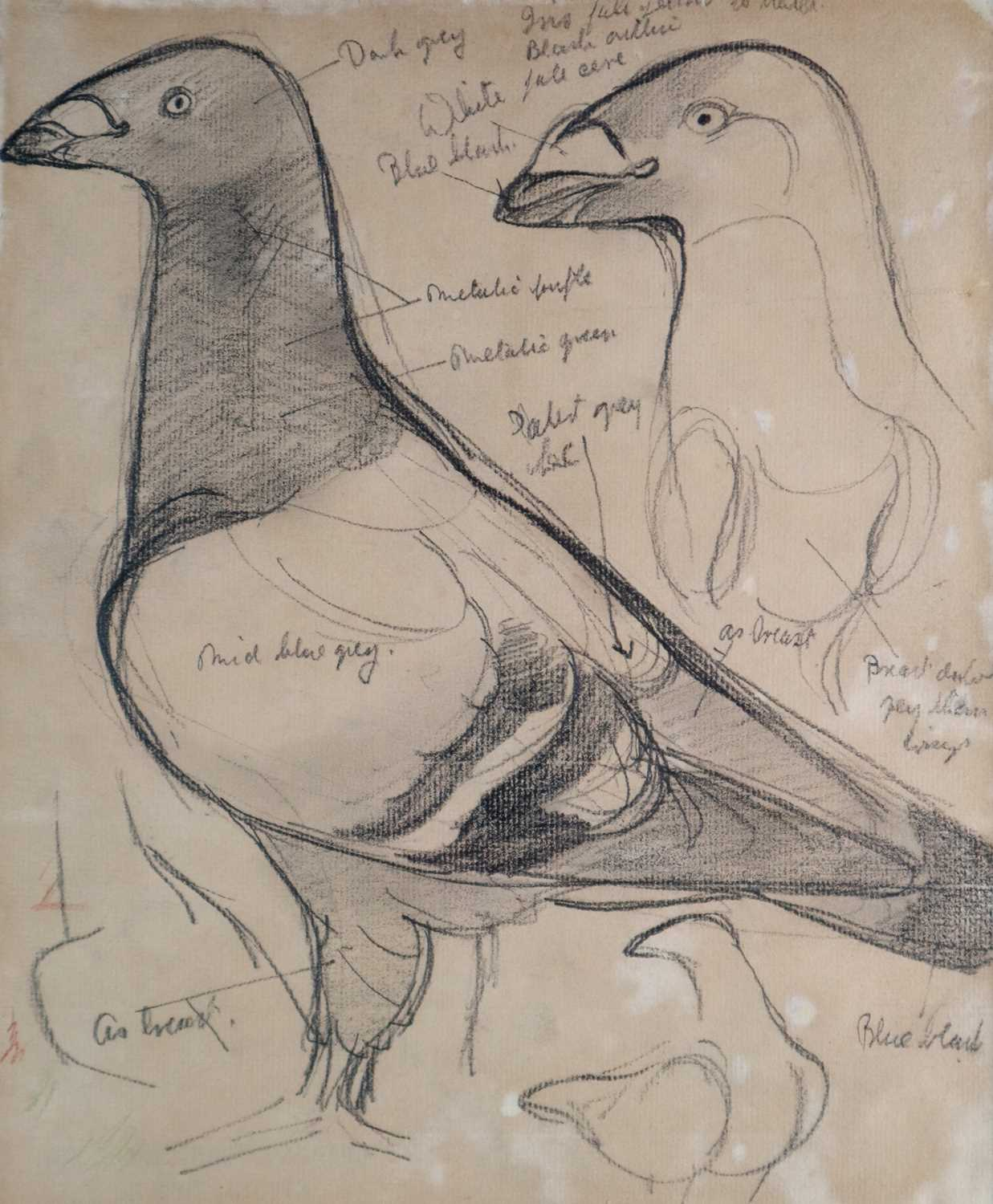 Charles Frederick Tunnicliffe OBE RA (1901-1979) Three Pigeon Drawings inc Exhibition Homer - Image 2 of 8