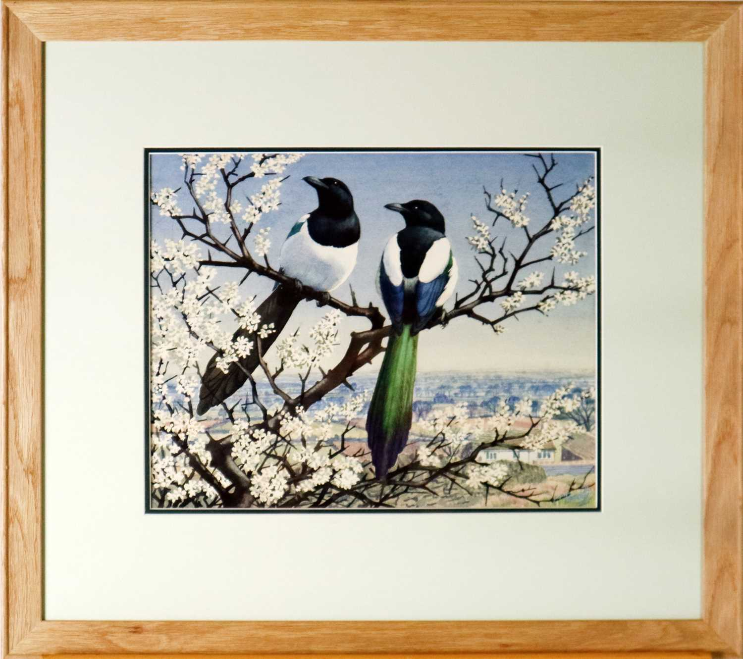 Charles Frederick Tunnicliffe OBE RA(1901-1979) Magpies in Blossom - Image 2 of 5