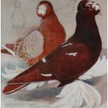 Charles Frederick Tunnicliffe OBE RA (1901-1979) Double Crested German Trumpeters