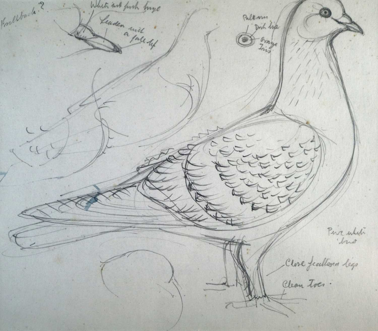 Charles Frederick Tunnicliffe OBE RA (1901-1979) Three Pigeon Drawings inc Exhibition Homer