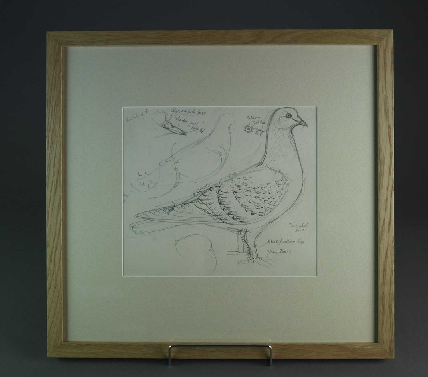 Charles Frederick Tunnicliffe OBE RA (1901-1979) Three Pigeon Drawings inc Exhibition Homer - Image 8 of 8