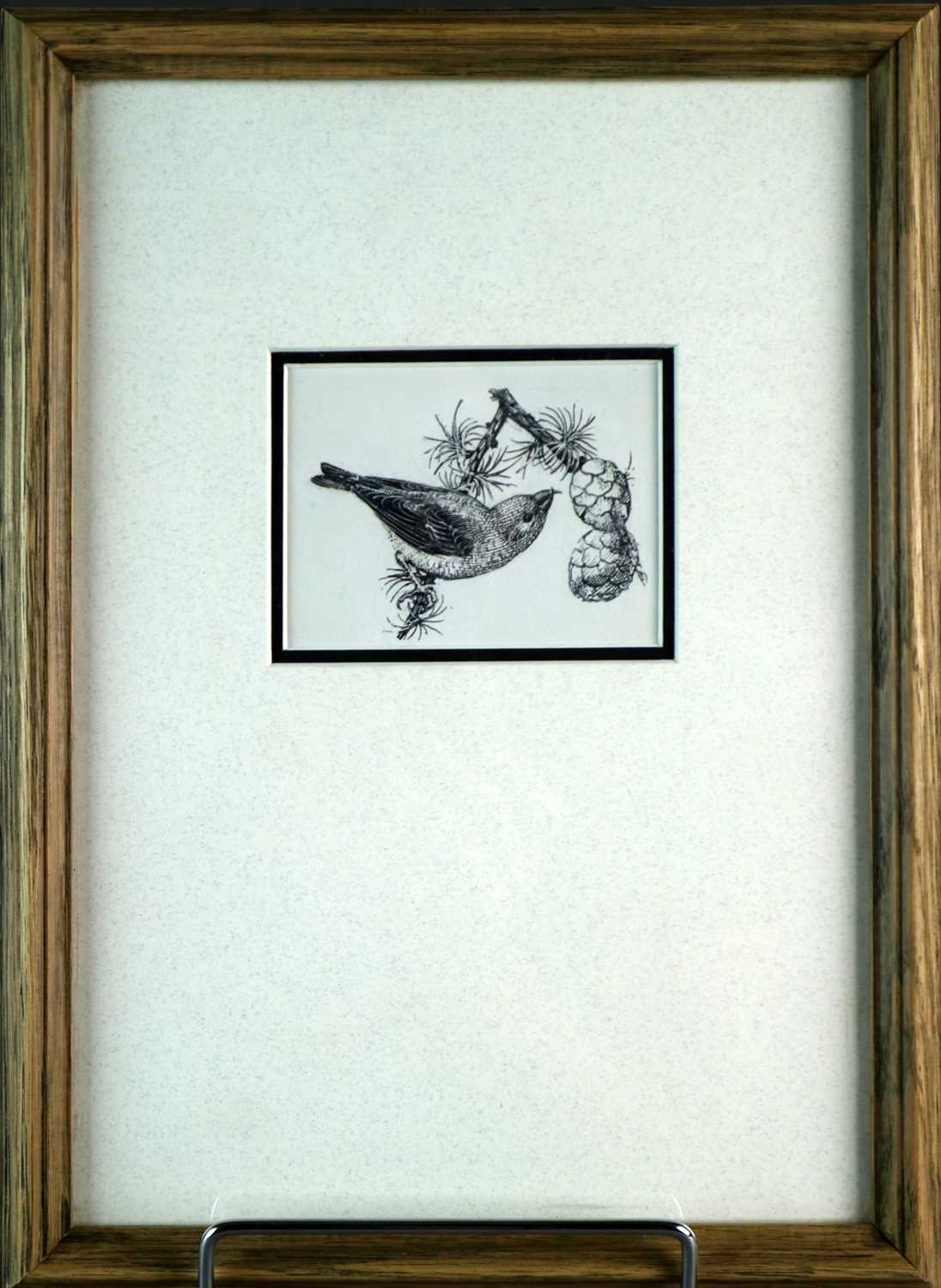 Charles Frederick Tunnicliffe OBE RA(1901-1979) Crossbill - Image 2 of 2