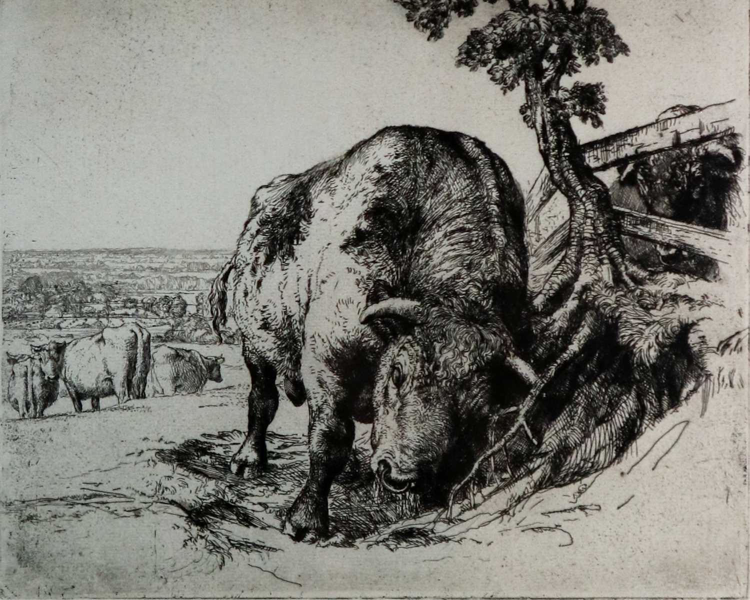 Charles Frederick Tunnicliffe OBE RA (1901-1979) The Bull