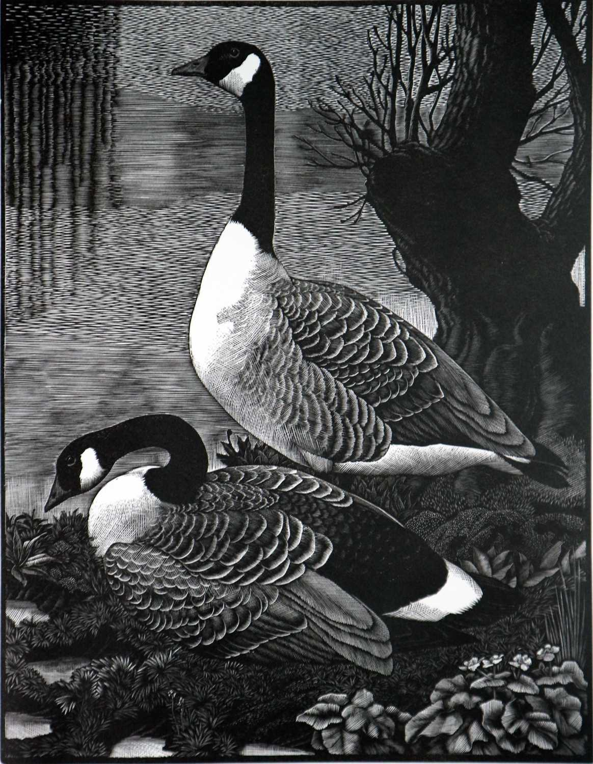 Charles Frederick Tunnicliffe OBE RA (1901-1979) The Memorial Collection Parts I and II - Image 8 of 19