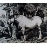 Charles Frederick Tunnicliffe OBE RA (1901-1979) The White Horse