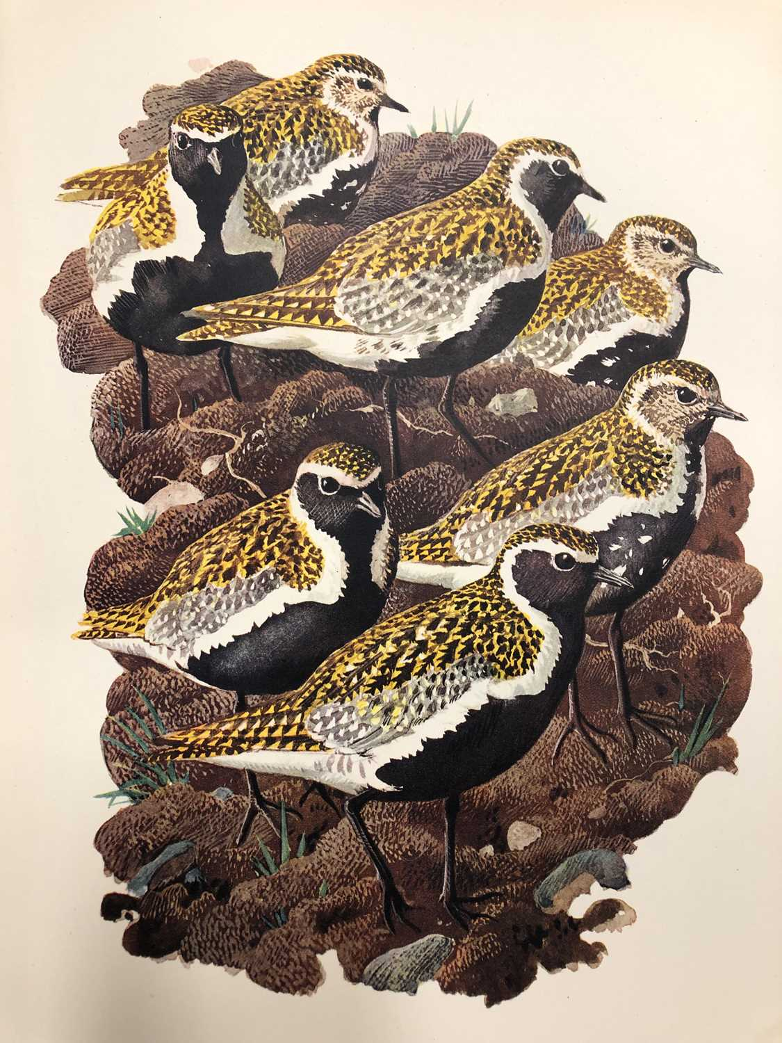Charles Frederick Tunnicliffe OBE RA (1900-1979) Shorelands Summer Diary - Image 3 of 11