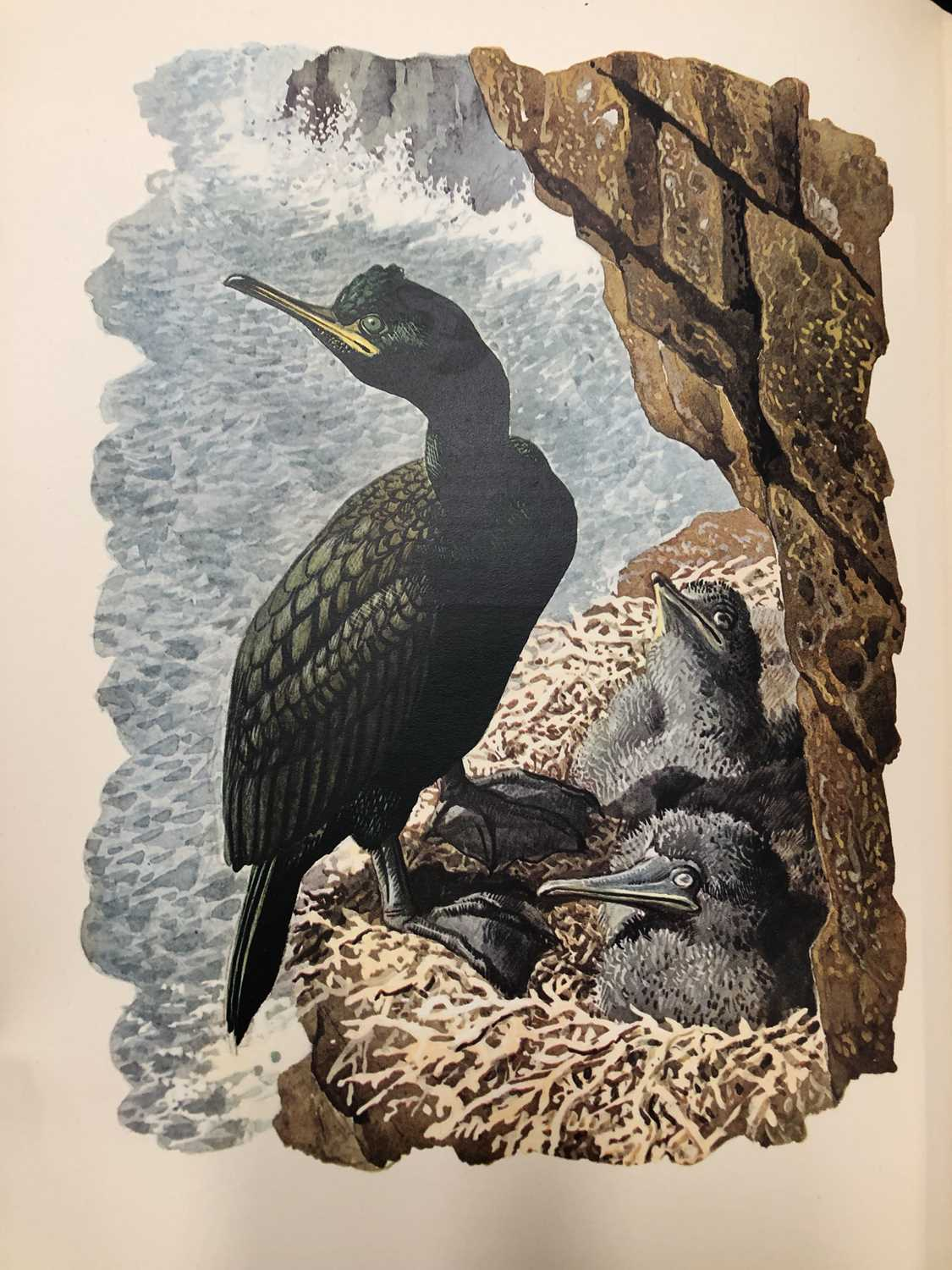 Charles Frederick Tunnicliffe OBE RA (1900-1979) Shorelands Summer Diary - Image 11 of 11