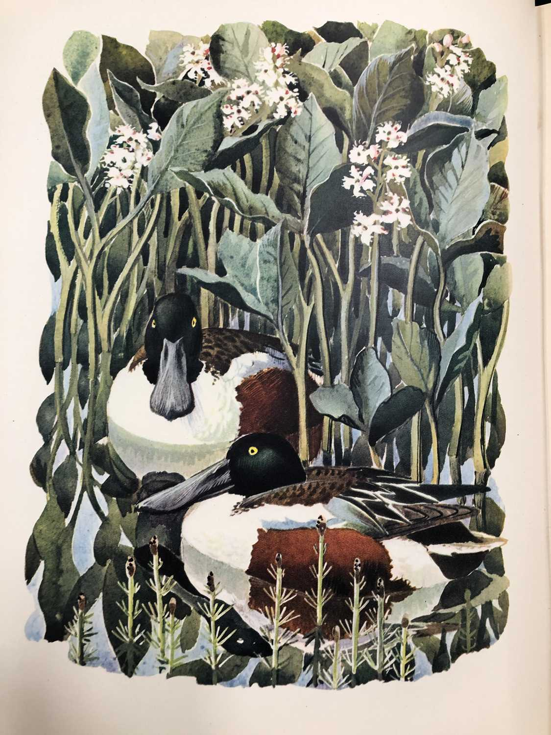 Charles Frederick Tunnicliffe OBE RA (1900-1979) Shorelands Summer Diary - Image 9 of 11