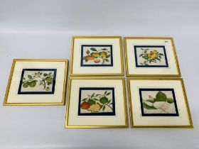 SET OF 5 FRAMED C19 CHINESE PITH PAINTINGS OF FRUIT.
