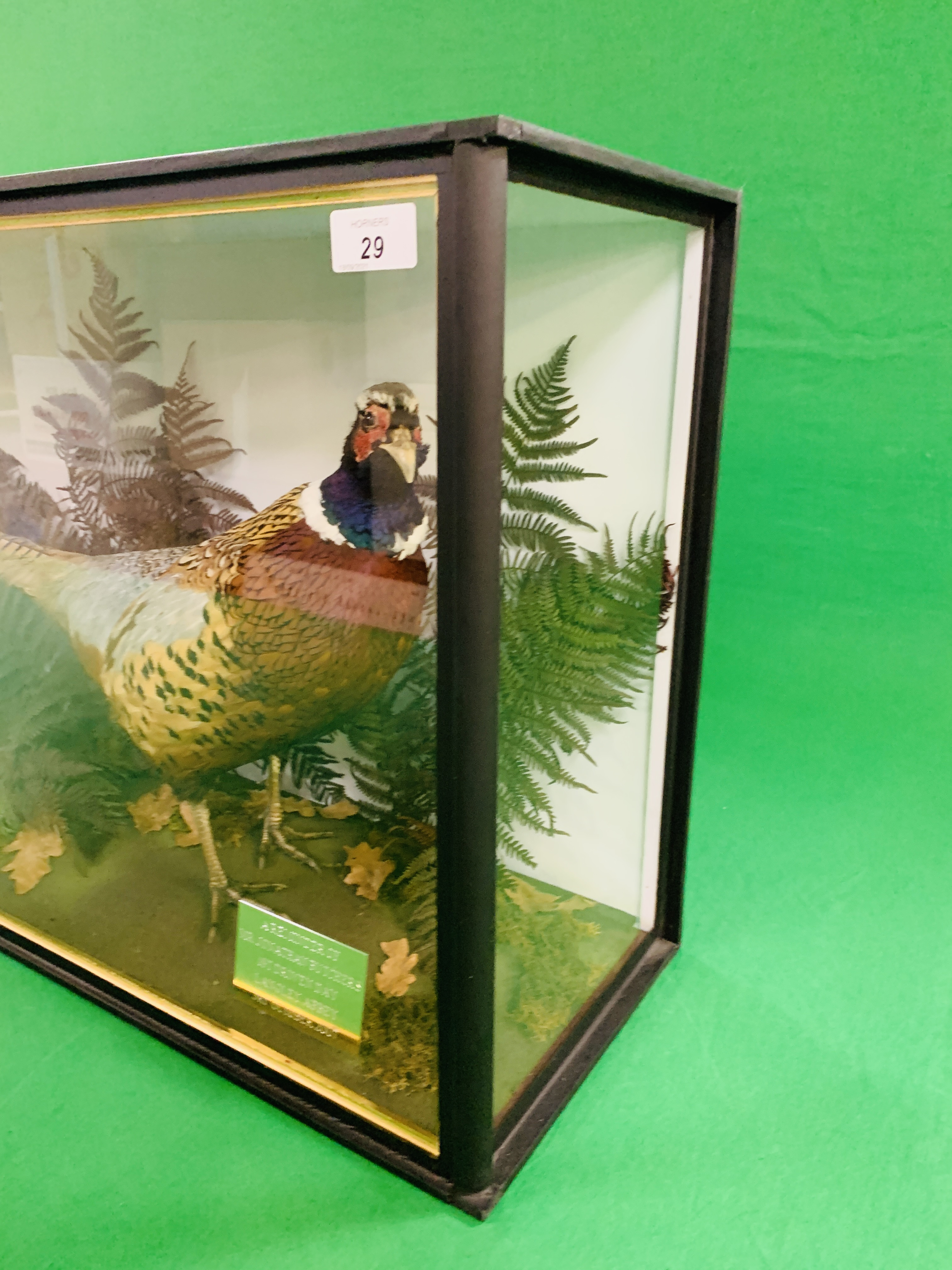 A CASED TAXIDERMY STUDY OF COCK BIRD PHEASANT AND PARTRIDGE (CABINET DIMENSIONS WIDTH 91CM, - Image 9 of 10