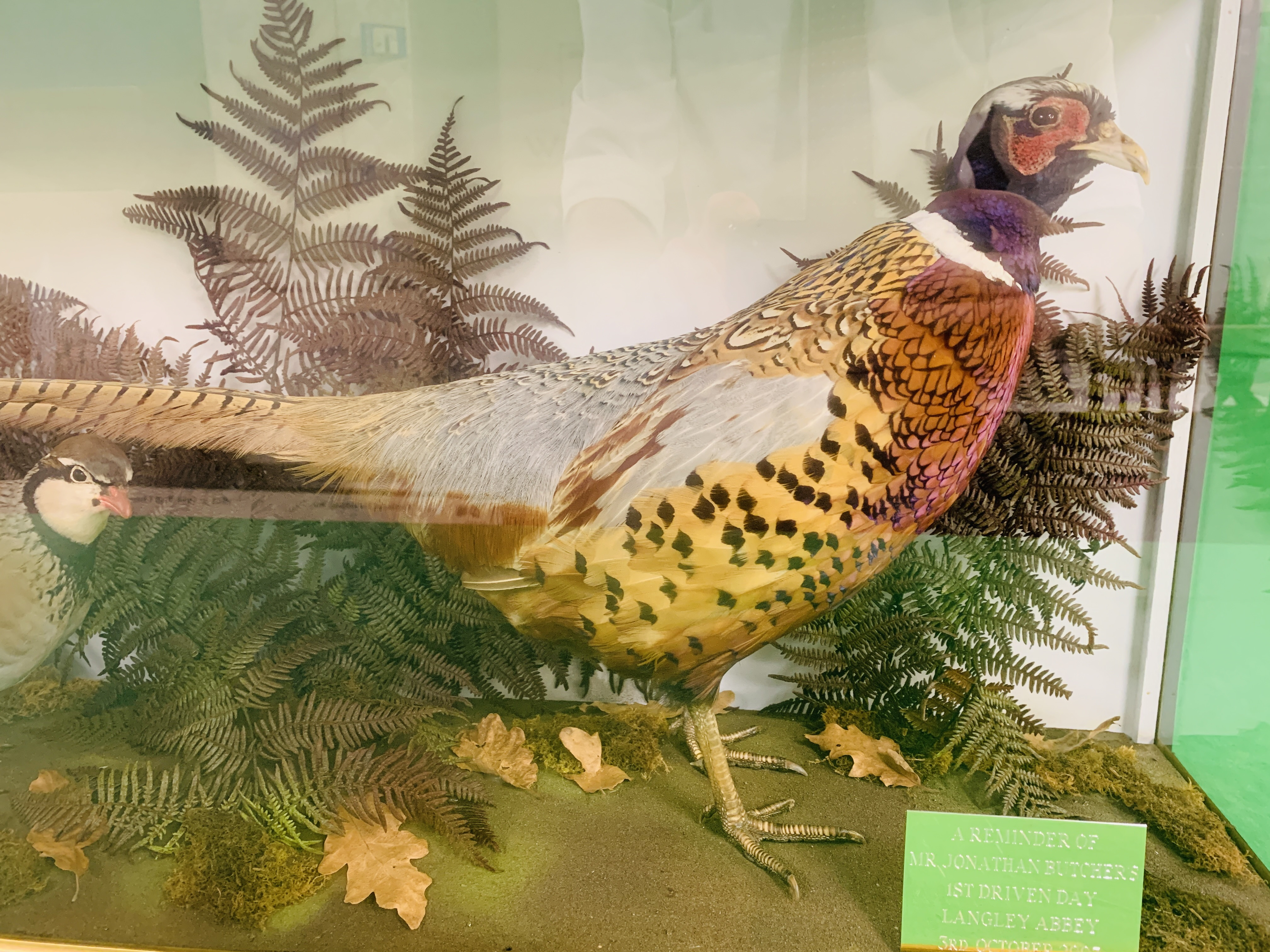 A CASED TAXIDERMY STUDY OF COCK BIRD PHEASANT AND PARTRIDGE (CABINET DIMENSIONS WIDTH 91CM, - Image 2 of 10