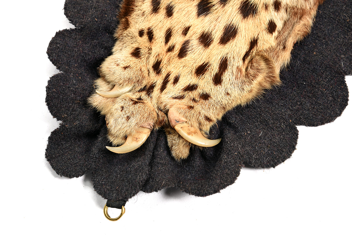A VINTAGE FULL RUG-MOUNT OF AN INDIAN LEOPARD, lined with beige canvas and black baize. - Image 3 of 5