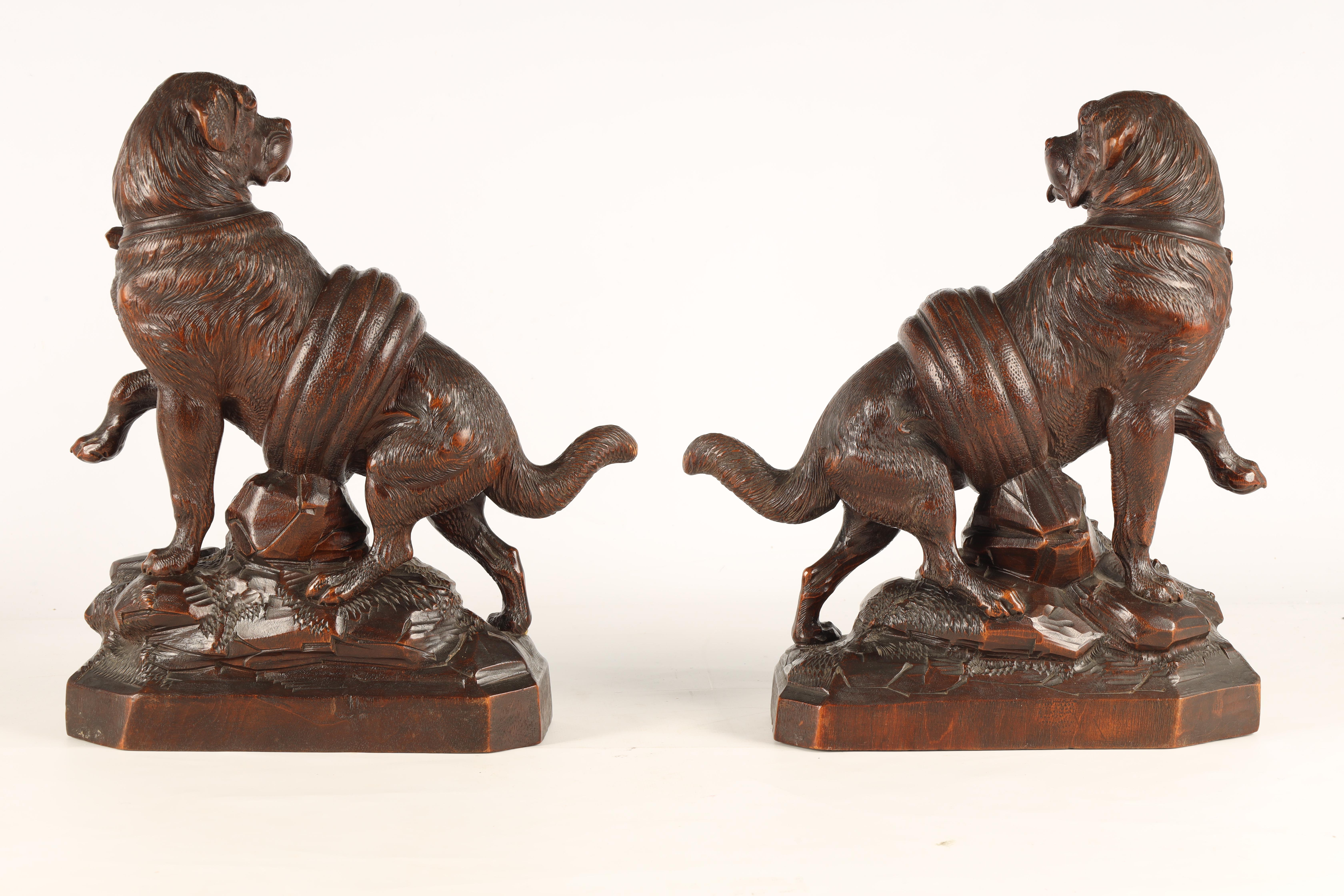 A GOOD QUALITY PAIR OF LATE 19TH CENTURY BLACK FOREST CARVED SCULPTURES modelled as Saint Bernards - Image 5 of 6