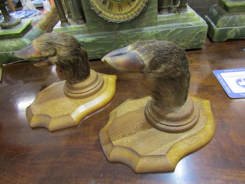 TAXIDERMY, pair of shield mounted deer hoof coat pegs
