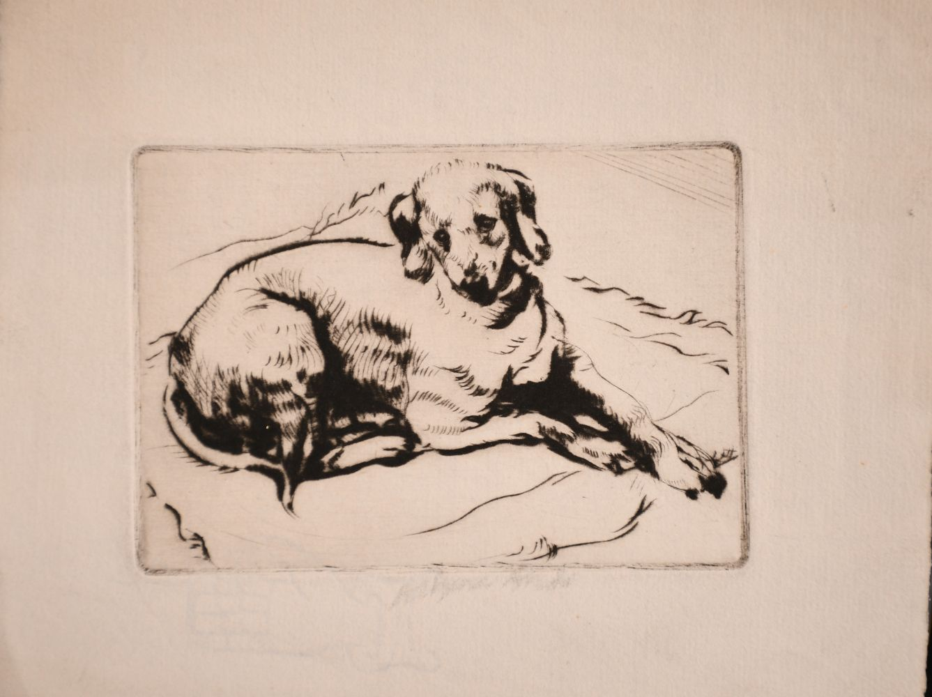 Athena Andrade, A group of dog etchings signed in pencil, etchings, various sizes, (5) - Image 2 of 6
