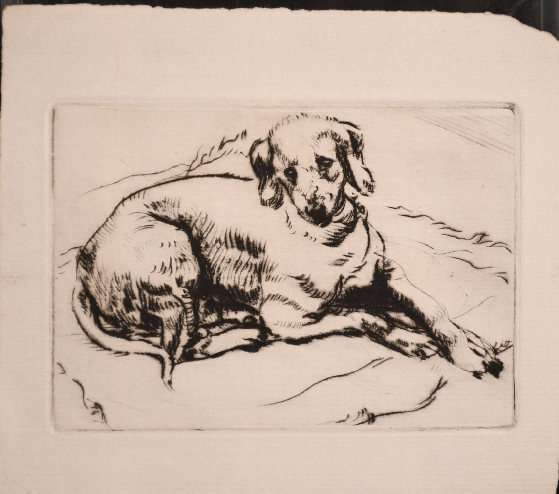 Athena Andrade, A group of dog etchings signed in pencil, etchings, various sizes, (5) - Image 5 of 6