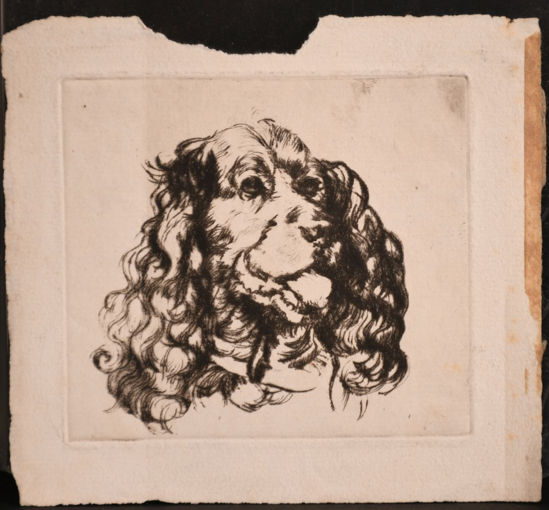 Athena Andrade, A group of dog etchings signed in pencil, etchings, various sizes, (5) - Image 6 of 6