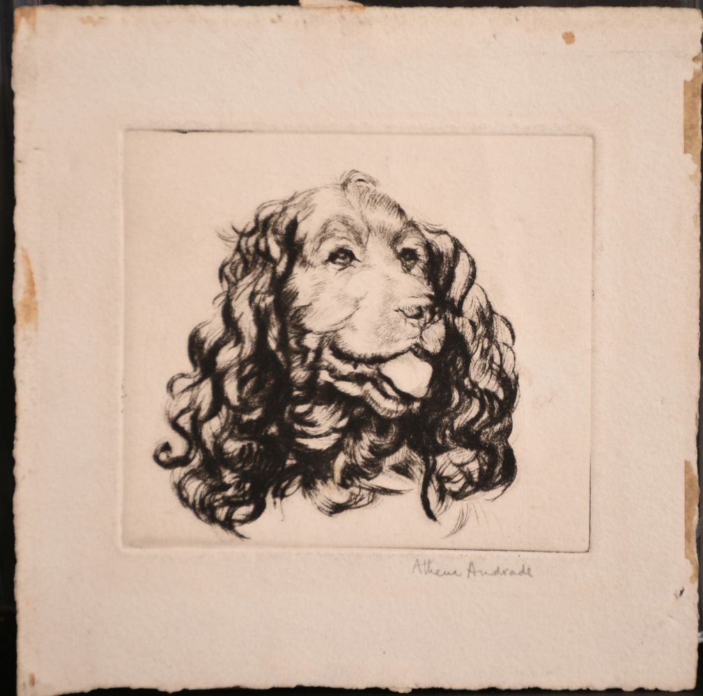 Athena Andrade, A group of dog etchings signed in pencil, etchings, various sizes, (5) - Image 3 of 6