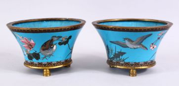 A PAIR OF JAPANESE MEIJI PERIOD CLOISONNE JARDINIERE'S, each with turquoise enamel ground with