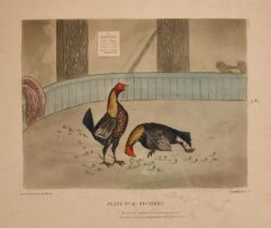 After Alken, A pair of prints depicting cock fighting scenes including 'Plate No 1-A Start' and '