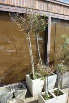 A large pair of modern garden pots containing shrubs.