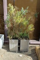 A pair of modern aluminium garden planters containing shrubs.