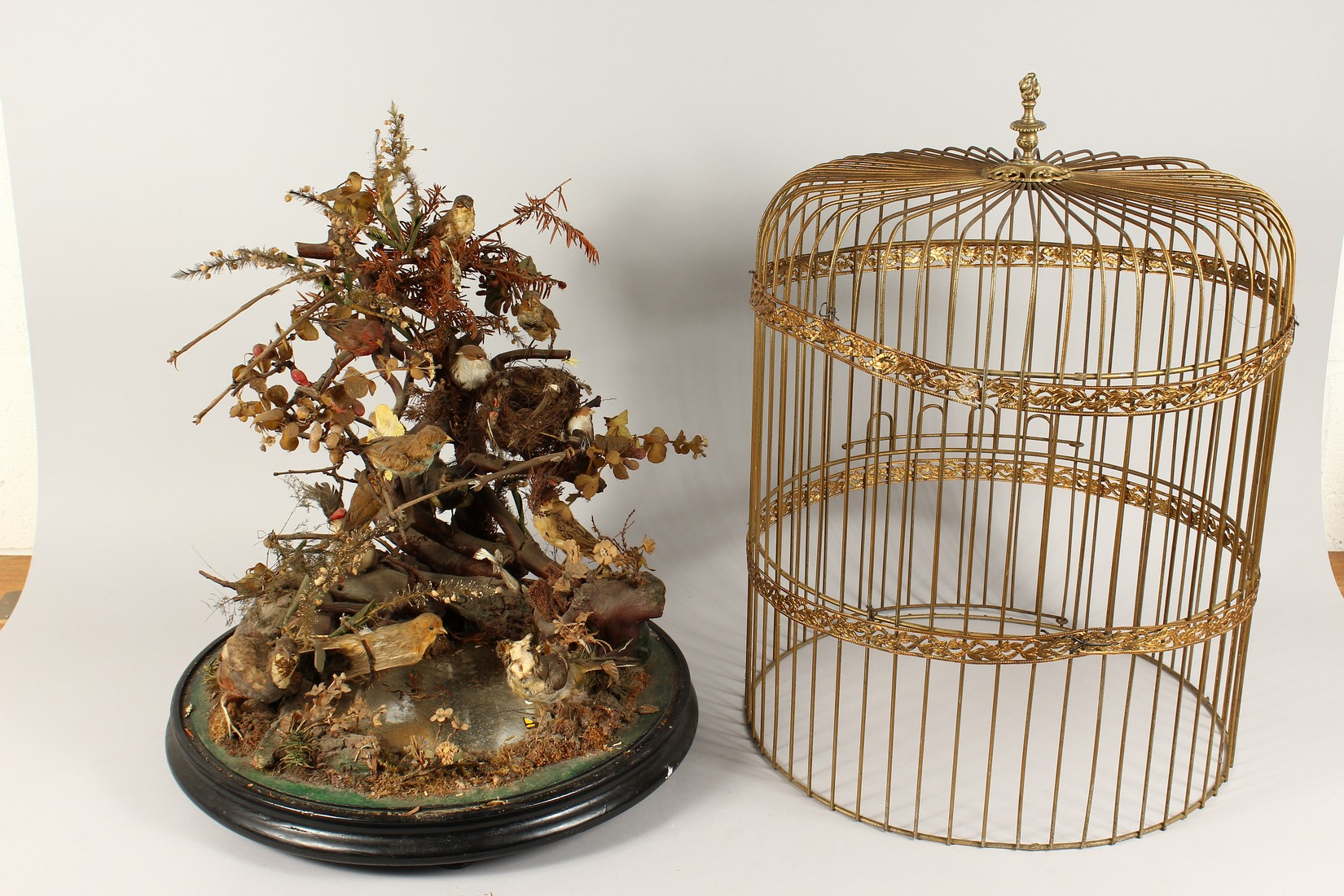 TAXIDERMY - VARIOUS SMALL BIRDS IN A METAL CAGE. Cage 23 ins tall - Image 2 of 6
