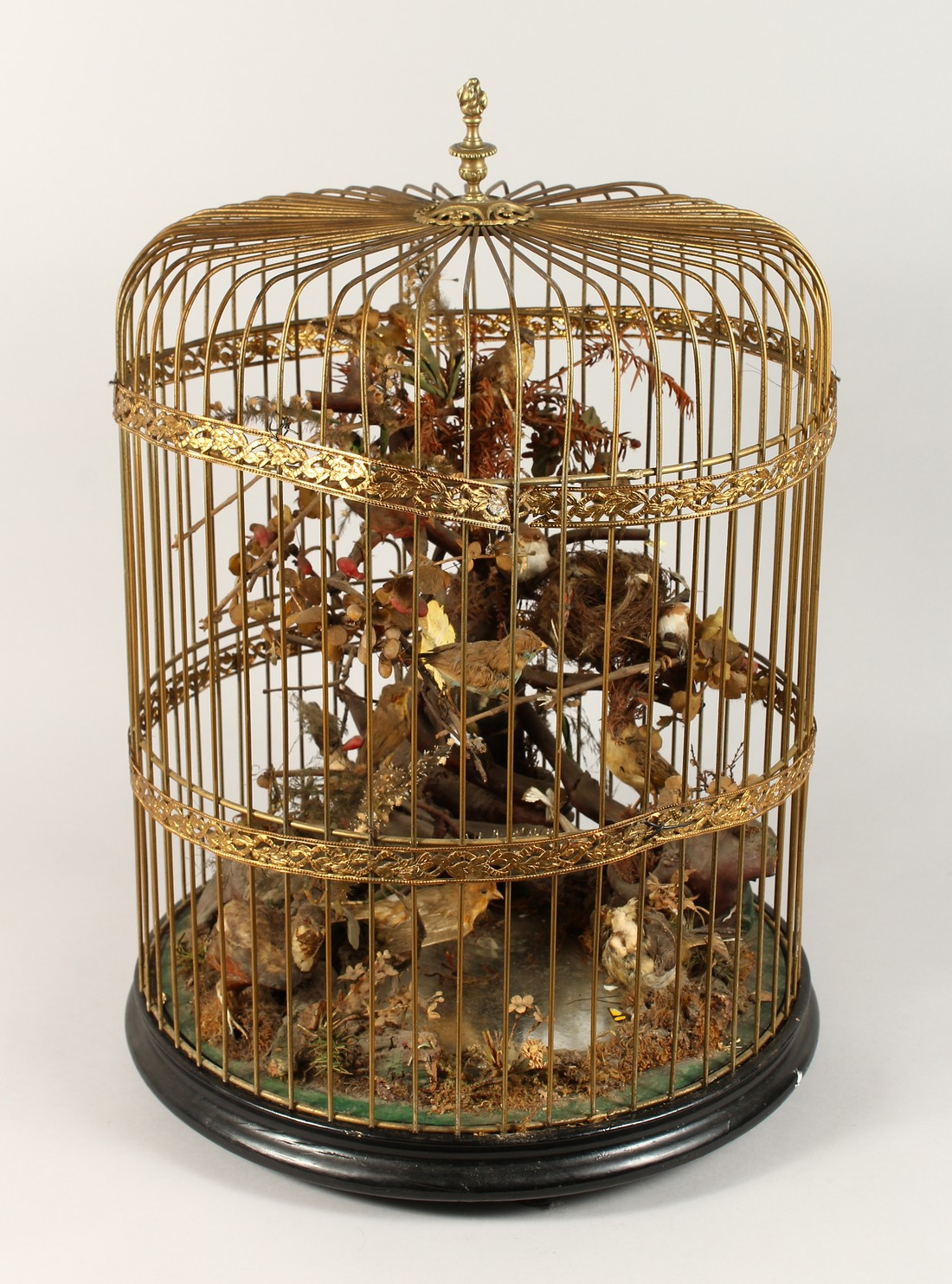 TAXIDERMY - VARIOUS SMALL BIRDS IN A METAL CAGE. Cage 23 ins tall