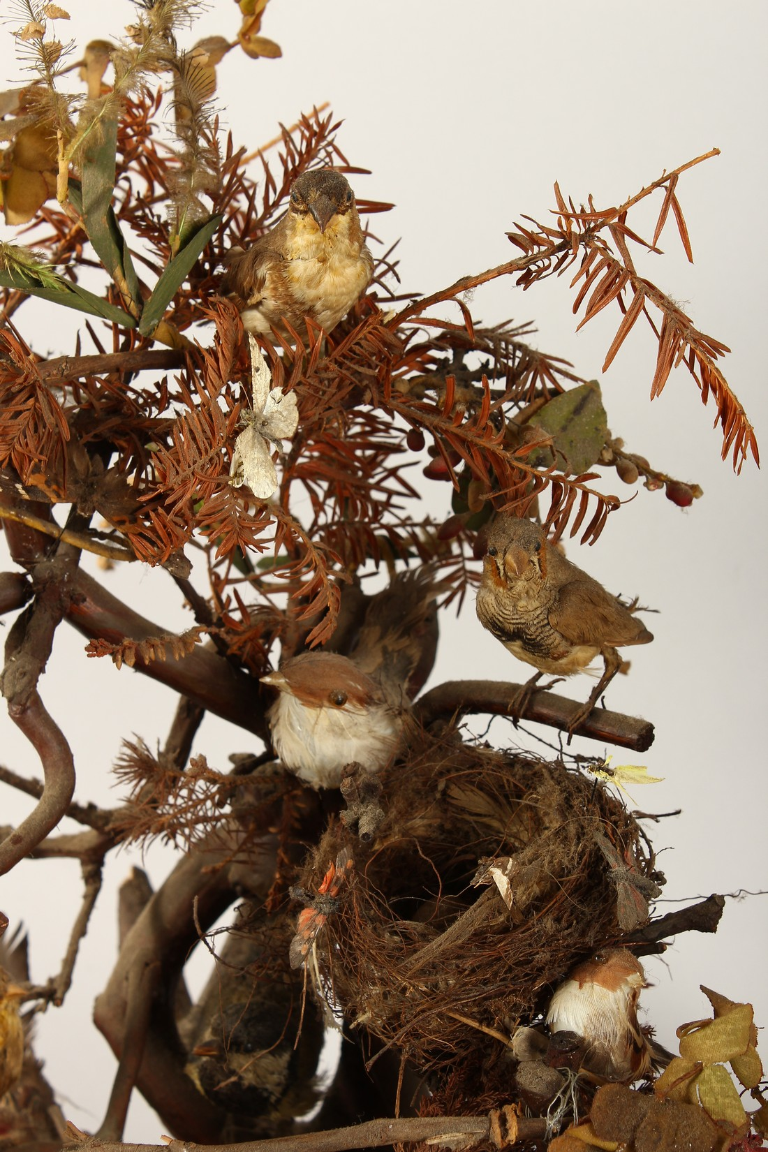 TAXIDERMY - VARIOUS SMALL BIRDS IN A METAL CAGE. Cage 23 ins tall - Image 4 of 6