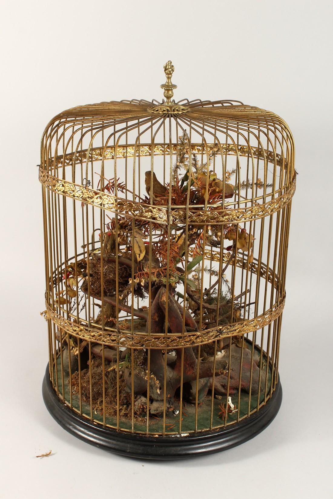 TAXIDERMY - VARIOUS SMALL BIRDS IN A METAL CAGE. Cage 23 ins tall - Image 6 of 6