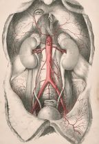 """A set of three anatomical lithographs after J. Walsh circa 1841, all 15"""" x 10"""", (3)."""