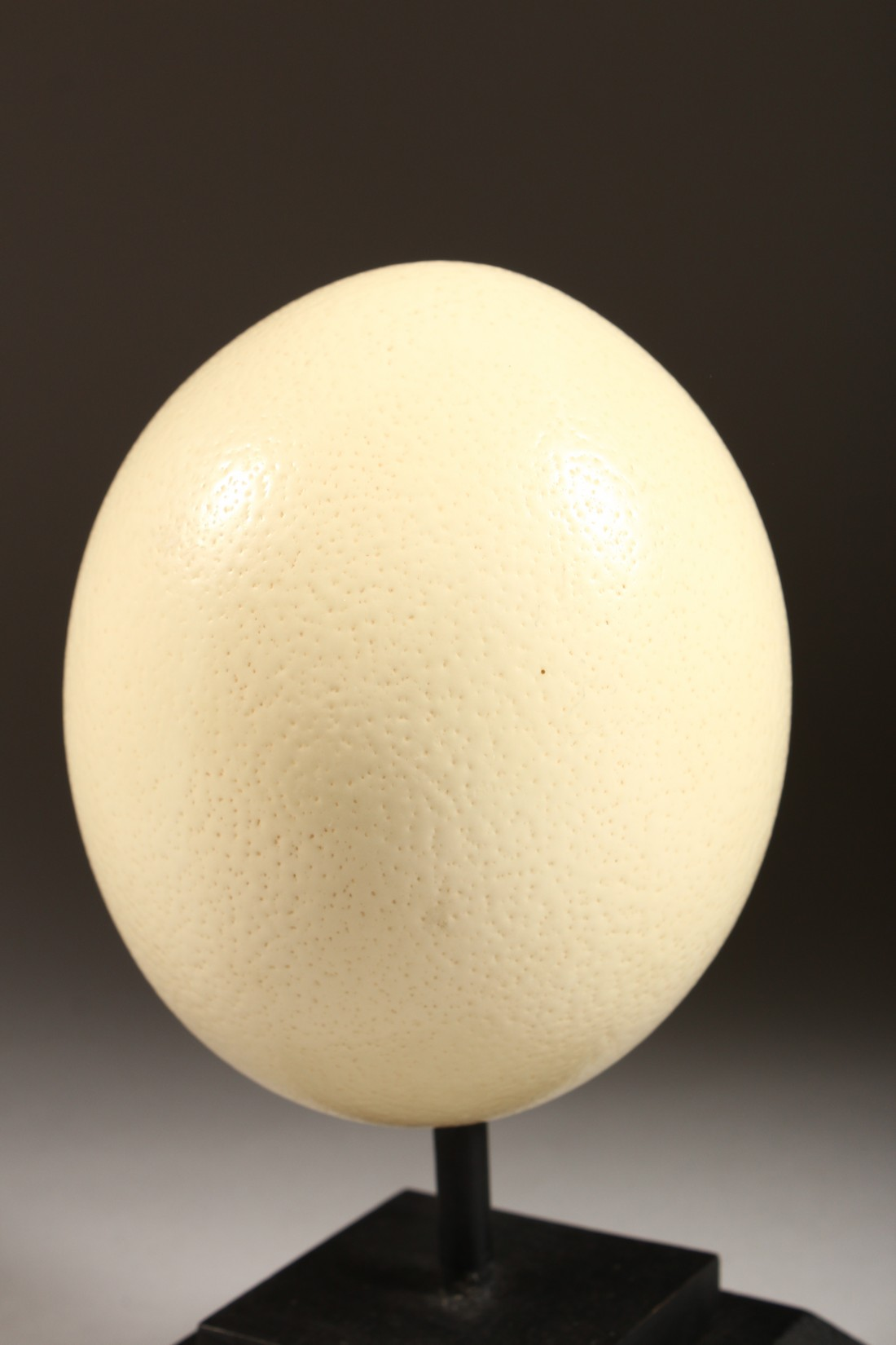 AN OSTRICH EGG on a stand 5.5ins high - Image 2 of 3