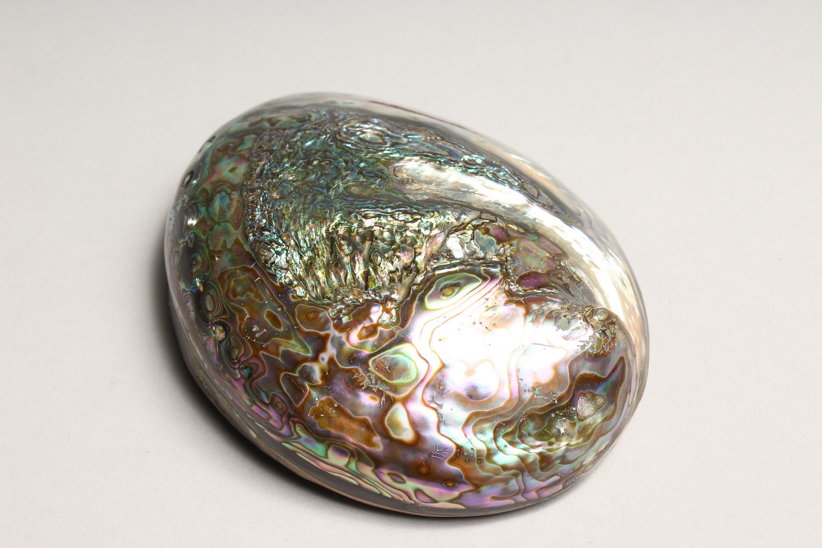 A MOTHER OF PEARL OPEN SHELL 7ins long - Image 3 of 4