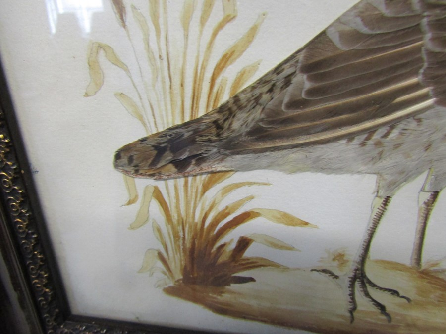 Pair of ornithological feather pictures 33 cm x 28 cm (size including frame) - Image 7 of 14