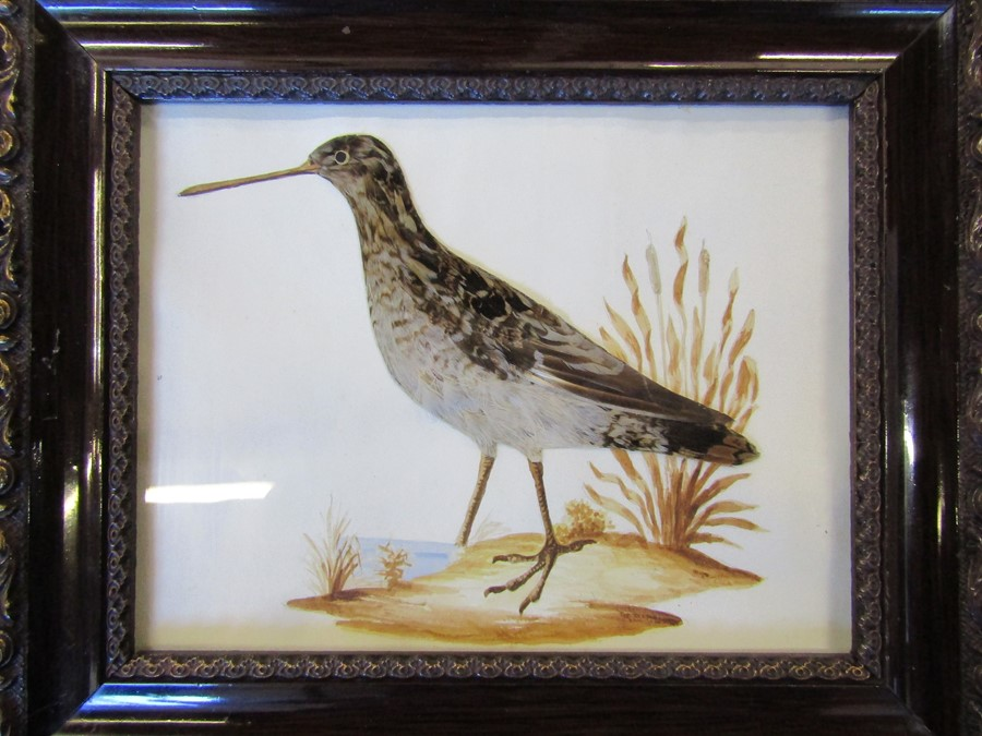 Pair of ornithological feather pictures 33 cm x 28 cm (size including frame) - Image 2 of 14