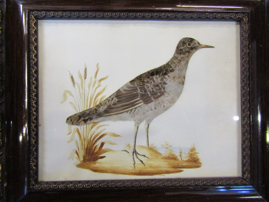 Pair of ornithological feather pictures 33 cm x 28 cm (size including frame) - Image 3 of 14