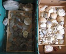 Box of assorted fossils and shells